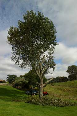 testimonials for tree services in Tauranga, KatiKati and Waihi