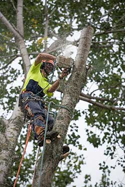 Tree felling and pruning services - tauranga